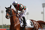 March 27, 2021: HAYYAN (FR) #8, in the post parade for the Kahayla Classic on Dubai World Cup Day, Meydan Racecourse, Dubai, UAE. Shamela Hanley/Eclipse Sportswire/CSM