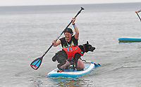 BNPS.co.uk (01202 558833)<br /> Pic: ZacharyCulpin/BNPS<br /> <br /> Pictured: A dog shakes off the sea water<br /> <br /> Putting their best paw forward hoping to ride the wave of success - Competitors and their dogs take part in the annual Dog Surfing championships.<br /> <br /> The event known as The 'dogmasters' took place today on Bournemouth beach in front of packed crowd, it's the country's only dog surfing and paddleboard championship.