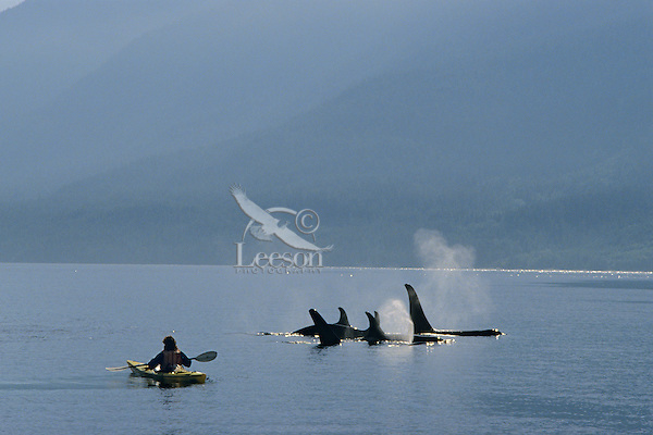 Orca Whale watching (Orcinus Orca) off Vancouver Island, British Columbia, Canada.