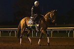 November 4, 2020: Jessica Morgan/Eclipse Sportswire/Breeders Cup: Digital Age, trained by trainer Chad C. Brown, exercises in preparation for the Breeders' Cup Mile at Keeneland Racetrack in Lexington, Kentucky on November 4, 2020.