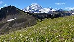 Skyline Divide Trail, Mount Baker, Wildflowers 8/23/2020