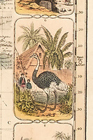 BNPS.co.uk (01202 558833)<br /> Pic: DominicWinter/BNPS<br /> <br /> An exotic ostrich.<br /> <br /> It's Wokopoly..<br /> <br /> A rare Victorian board game celebrating the might of the British Empire has emerged for sale - and it is sure to trigger the woke brigade.<br /> <br /> The World Map Board Game was produced in the aftermath of the successful World Exhibition held at Crystal Palace in 1851 to help Brits learn more about its 80-odd foreign territories.<br /> <br /> These are referred to as Britain's 'possessions' and there are images of tiger-hunting in India and Australian aborigines.