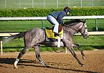 29 April 2010: Paddy O'Prado gallops at Churchill Downs, Louisville, KY.
