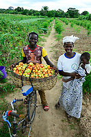 BURKINA FASO, Province Poni, Gaoua, vegetable farming in village / Gemueseanbau in einem Dorf, Tomatenernte
