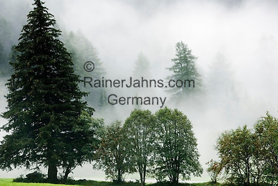 Italy, South Tyrol, Valle di Anterselva, trees, fog