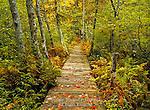 Courtney Pond Trail, Adirondack Mountains, New York