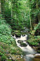 A stream running through the Black Forest in Baden Baden, Germany. landscape, trees. Baden Baden, Germany.