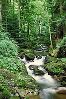 A stream running through the Black Forest in Baden Baden, Germany. landscape, trees. Baden Baden, Germany.