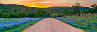 Texas Bluebonnets Sunset Hill Country Panorama  - We love this rural country dirt road lined with Texas bluebonnets in spring with the hill behind glowing with an orange sky from the sunset.  The bluebonnets or lupines are a favorite things for people to photography every year. This was a pretty decent year for texas wildflowers and these less traveled places make them even better and our favorite landscape to photograph.  This area is ranch land on both sides with no fences in many areas so cattle can cross the road on their way to better grazing. You are just as likely to see a 2000 pound longhorn cross the road in front of you, but always keep your distance longhorns are known for being gentle but we have seen a few aggressive ones. Texas wildflowers are always a favorite thing to capture and add a sunset or sunrise and its even better.