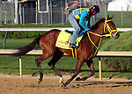 April 23, 2014 Wildcat Red gallops at Churchill Downs with rider Juan Belmonte.  He is trained by Jose Garoffalo and owned by Honors Stable Corp. He won the Fountain of Youth Stakes at Gulfstream Park in February.