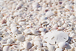 Sanibel Island, Florida; a bleached white sand dollar on the shell covered beach © Matthew Meier Photography, matthewmeierphoto.com All Rights Reserved
