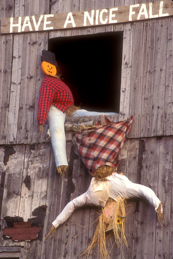 """AJ5716, fall decoration, display, decorations, autumn, """"""""Have a Nice Fall"""""""" A fall decoration of two scarecrows in a barn window (one is upside down falling out) in Danville in Caledonia County in the state of Vermont."""