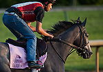Hard Not To Like during morning workouts for the 138th Kentucky Oaks at Churchill Downs in Louisville, Kentucky on May 3, 2012.