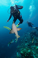 dive guide and inquisitive nurse shark, Ginglymostoma cirratum, Cypress Tunnels dive site Ambergris Caye, Belize, Central America (Caribbean Sea) (do)