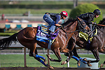 OCT 27 2014:One Lucky Dane, trained by Bob Baffert, exercises in preparation for the Breeders' Cup Juvenile at Santa Anita Race Course in Arcadia, California on October 27, 2014. Kazushi Ishida/ESW/CSM
