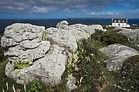 Europe/France/Bretagne/29/Finistère/ Pointe du Millier