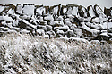 12/01/17<br />  <br /> A snow-covered dry stone wall on the A53 Axe Edge between Leek and Buxton  in The Derbyshire Peak District. <br /> <br /> All Rights Reserved F Stop Press Ltd. (0)1773 550665   www.fstoppress.com