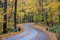 Mt. Greylock State Reservation, Massachusetts, USA