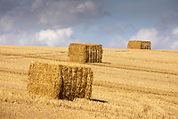 13-8-2021 Star bales <br /> ©Tim Scrivener Photographer 07850 303986<br />      ....Covering Agriculture In The UK....