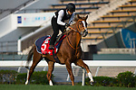 SHA TIN,HONG KONG-DECEMBER 09 : Neorealism,trained by Noriyuki Hori,exercises in preparation for the Hong Kong Cup at Sha Tin Racecourse on December 9,2017 in Sha Tin,New Territories,Hong Kong (Photo by Kaz Ishida/Eclipse Sportswire/Getty Images)