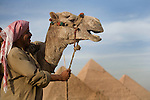 A local Egyptian man smiles with his camel at the Pyramids of Giza near Cairo, Egypt.