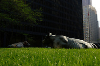 Bull sculpture on the grass beside<br /> the Toronto Dominion Centre between King Street West and wellington  in downtown Toronto.<br /> <br />     photo by Pierre Roussel - Images Distribution