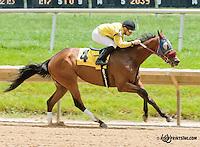 Ocala Son winning at Delaware Park on 6/15/13