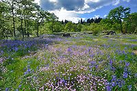 Camassia Natural Area in West Linn Oregon