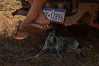 Nick Atkins taking a break with his dog Lin, on the Gibb River Road, on their way from Kununurra to Kalumburu.