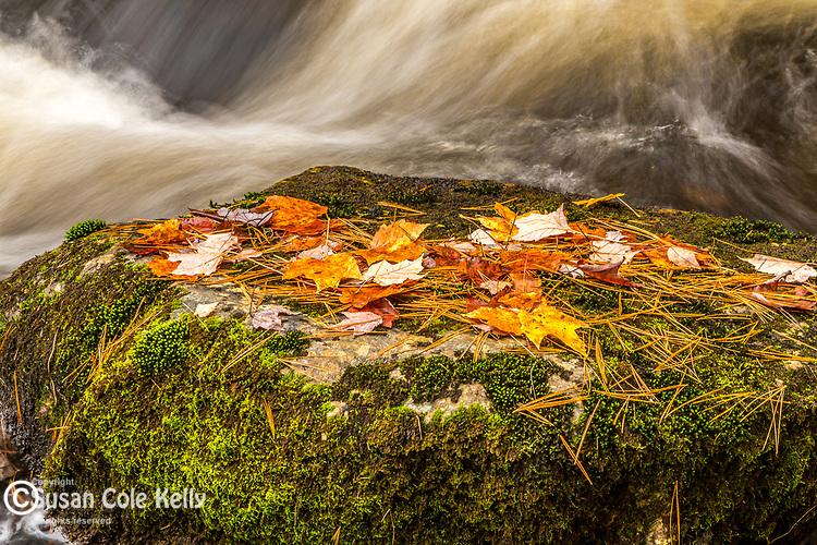 Autumn color in Franklin, Hancock County, Maine, USA