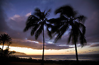 Swaying palm fronds against a Haleiwa Beach sunset, with Kaena Point in the background