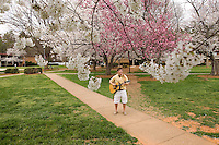 A male college student plays the guitar in the spring time on campus under the full bloom of cherry trees in Belmont, NC.