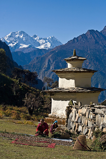 Nuns dry juniper branches near a chorten and mani wall at a remote TIBETAN BUDDHIST MONASTERY - NEPAL HIMALAYA