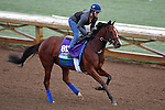 ARCADIA, CA - OCT 31: Oscar Performance, owned by American Racing, LLC and trained by Brian A. Lynch, exercises in preparation for the Breeders' Cup Juvenile Turf at Santa Anita Park on October 31, 2016 in Arcadia, California. (Photo by Scott Serio/Eclipse Sportswire/Breeders Cup)