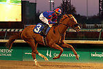 LOUISVILLE, KY -NOV 25: Ebben (Corey J. Lanerie) wins the 10th race at Churchill Downs, Louisville, Kentucky, an allowance race for two year olds. Owner Craig Aguiar, trainer Steve Margolis. By Trappe Shot x Please Be Discreet, by Discreet Cat. (Photo by Mary M. Meek/Eclipse Sportswire/Getty Images)