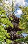The Kaneiji Temple five story Pagoda at Ueno Park, Tokyo, Japan.