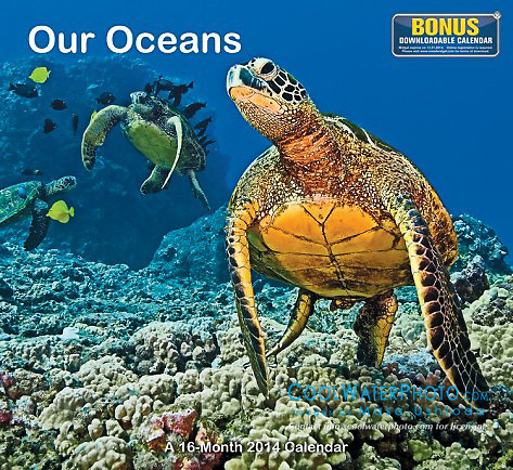 Mead Our Oceans 2014 Calendar, cover use, USA, Image ID: Green-Sea-Turtle-0042