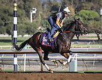 October 26, 2014: Seeking the Sherif works in preparation for the Breeders' Cup Sprint at Santa Anita Park in Arcadia, California on October 26, 2014. Zoe Metz/ESW/CSM