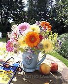 Interlitho, FLOWERS, BLUMEN, FLORES, photos+++++,gerbera,peachs,KL16424,#f#