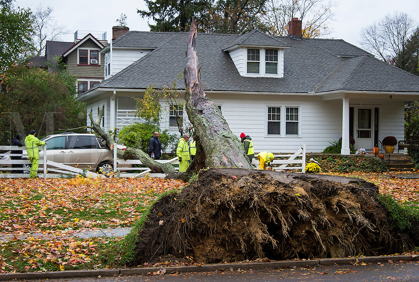 Local crew assesses tree and property damage in the wake of Hurricane Sandy, Moorestown, New Jersey, USA