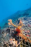 fishing net damage, Bintan Island, Indonesia, Pacific Ocean