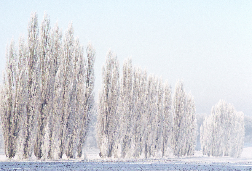 """Images from the Book Journey Through Colour and Time, """"Frozen Trees"""" Germany at the time it minus18 degrees."""
