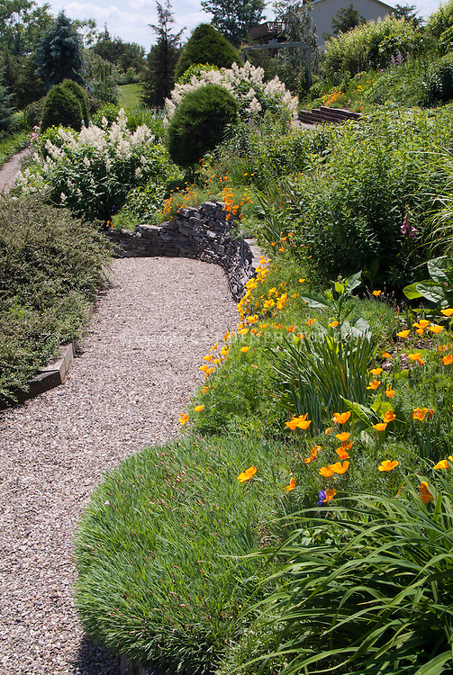 Wide stone pebble pathway through garden with California poppies in orange bloom.