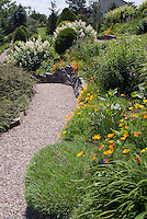 Wide stone pebble pathway through garden with California poppies in orange bloom.