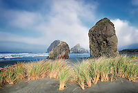 Fog and dune grass at Cape Sabastian. Oregon