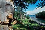 Totem Poles, Queen Charlotte Islands, Canada, Haida totem poles, Haida Gwaii, Haida village site of Skang wai, Red Cod Village, Ninstints, South Moresby Island, British Columbia, Canada, North America,.