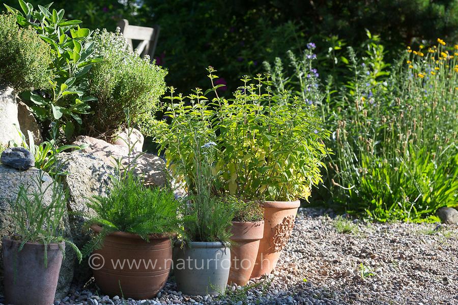 Wildkräuter in Töpfen, Topf, Blumentopf, Kübel, Oregano, Schafgarbe, Thymian in Blumentöpfen auf einer Terrasse, Kiesterasse, Kräutergarten