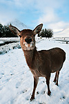 Deer smiles for camera by Kristen Brodie