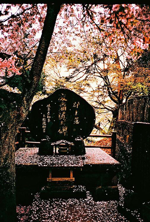 Memorial stone engraved with japanese letters covered with fallen petals of cherry blossom trees.<br /> <br /> Pierre commémorative gravée de lettres japonaises recouvertes de pétales tombés de cerisiers en fleurs.