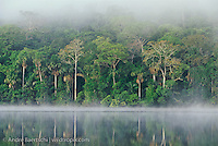 Lake Chalalan, lowland tropical rainforest, early morning, Madidi National Park, Bolivia.